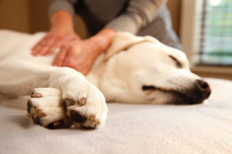 Koera massaaž