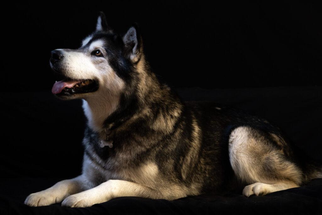 Üldmassaaž koertele